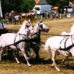 Konji bjelci iz Babine Grede 150x150 Običaj babina i posjeta novorođenčeta