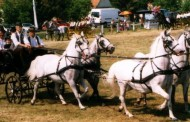 Konji bjelci iz Babine Grede
