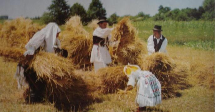 Kruh naš svagdašnji – žetva i vršidba u prošlosti