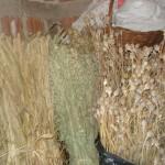 sušene trave 150x150 Ljekovito bilje i upotreba kod naših starih
