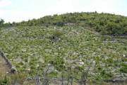 Kako su nastali dalmatinski vinogradi?