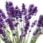 lavanda ljekovita svojstva 150x150 Ljekovita svojstva grožđa i najzastupljenije sorte