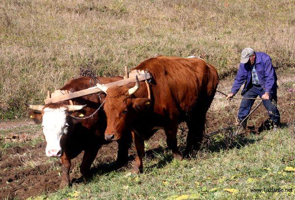 Poljodjelski radovi i način života u Bosni