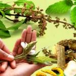 sakupljanje ljekovitog bilja 150x150 Ljekovito bilje i upotreba kod naših starih