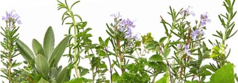 Mediteransko začinsko bilje