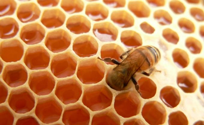 Narodni običaji uz pčelarstvo (počeci i načini prikupljanja meda)