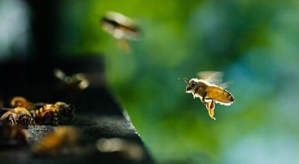 Razvoj pčelarstva (Narodni počeci pčelarstva)