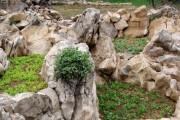 Obrada vrta i razvoj vrtlarstva kroz prošlost (vrt našeg djeda)