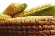 Tradicionalna Slavonska jela i tradicionalna prehrana u Slavoniji