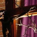 Uskrsni običaji na otoku Pašmanu i okolici
