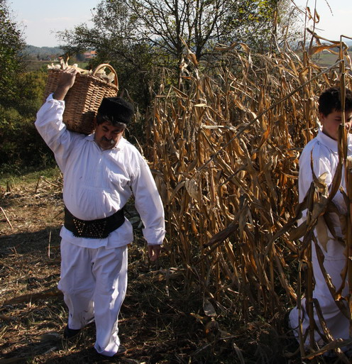 Tradicionalno branje kukuruza