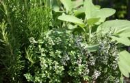 Kako pravilno brati bilje u vrtu