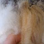 izbjeljivanje vune 150x150 Predenje i tkanje svakodnevni posao naših baka