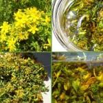 Ljekoviti pripravci od Gospine trave