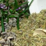 ljekovita svojstva i povijest ružmarina 150x150 Pripremite sami ljekoviti narodni čaj