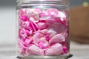 Ljekovita svojstva ruže i korištenje ruže kao ljeka