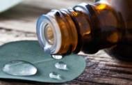 Sva ljekovita svojstva aromatičnog eukaliptusa