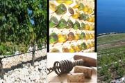 Sve što morate znati o vinu ili vinska abeceda Bakhovoga sina Ive Kozarčanina