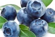 Mnogobrojna ljekovita svojstva borovnice