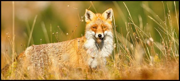 Poučna priča o lisici i lovcima