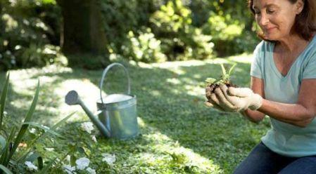 sadnja ljekovitog bilja savjeti