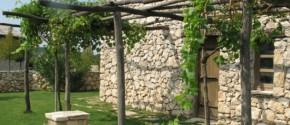 Tradicionalna loza pored kuće