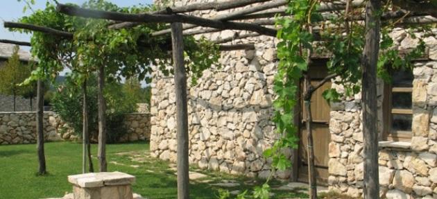 Zanimljivosti o vinu i vinogradima na našim područjima
