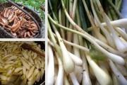 Od ideje do izvoza – Dalmatinska ljutika –