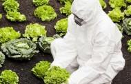 Veliki dolazak GM hrane na domaće tržište