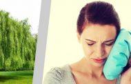 Vrba jednostavni i brzi lijek za bol u zubu